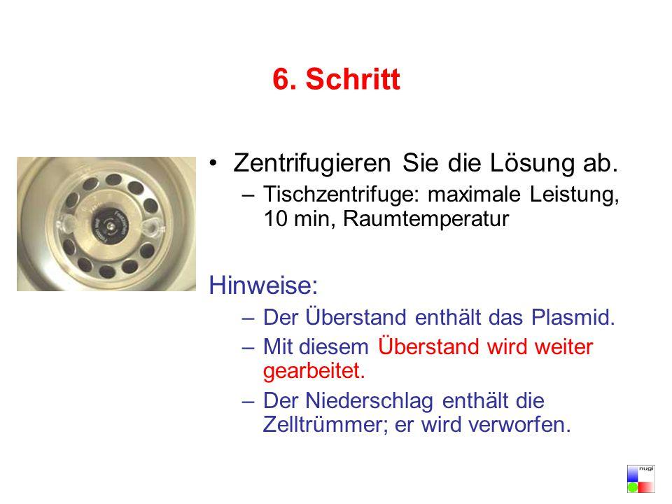 6. Schritt Zentrifugieren Sie die Lösung ab. –Tischzentrifuge: maximale Leistung, 10 min, Raumtemperatur Hinweise: –Der Überstand enthält das Plasmid.