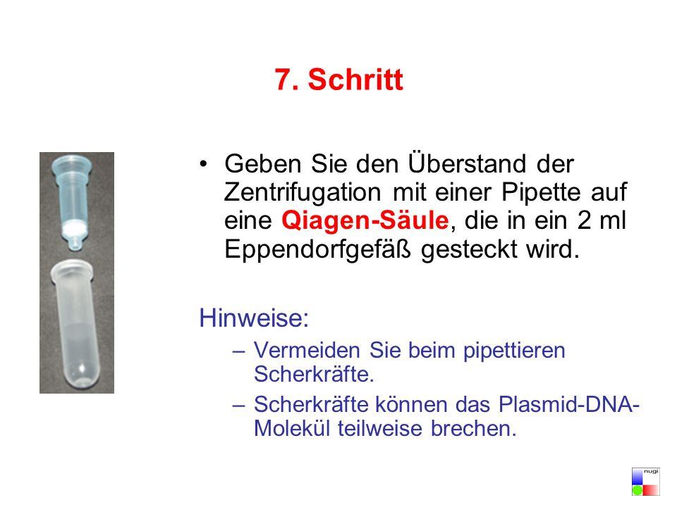7. Schritt Geben Sie den Überstand der Zentrifugation mit einer Pipette auf eine Qiagen-Säule, die in ein 2 ml Eppendorfgefäß gesteckt wird. Hinweise: