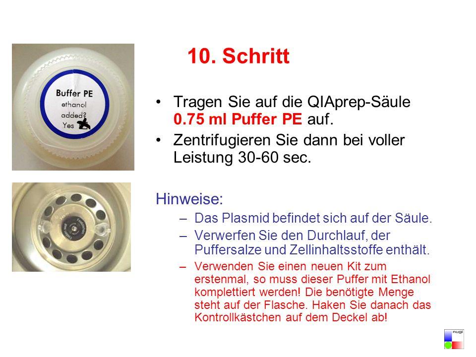 10. Schritt Tragen Sie auf die QIAprep-Säule 0.75 ml Puffer PE auf. Zentrifugieren Sie dann bei voller Leistung 30-60 sec. Hinweise: –Das Plasmid befi