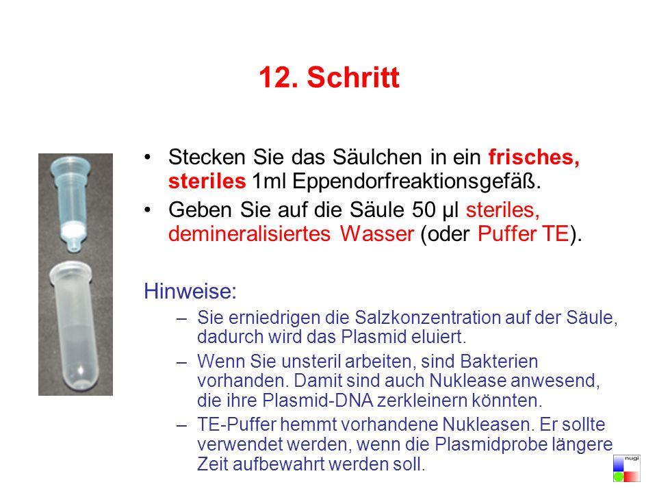 12. Schritt Stecken Sie das Säulchen in ein frisches, steriles 1ml Eppendorfreaktionsgefäß. Geben Sie auf die Säule 50 µl steriles, demineralisiertes