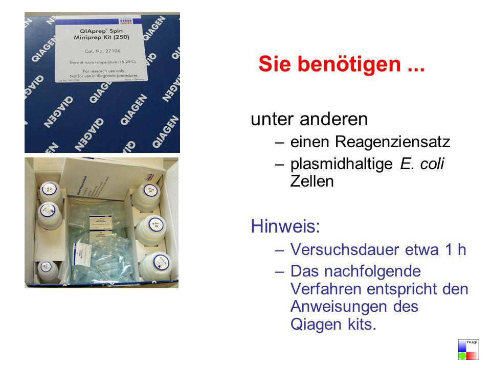 Sie benötigen... unter anderen –einen Reagenziensatz –plasmidhaltige E. coli Zellen Hinweis: –Versuchsdauer etwa 1 h –Das nachfolgende Verfahren entsp