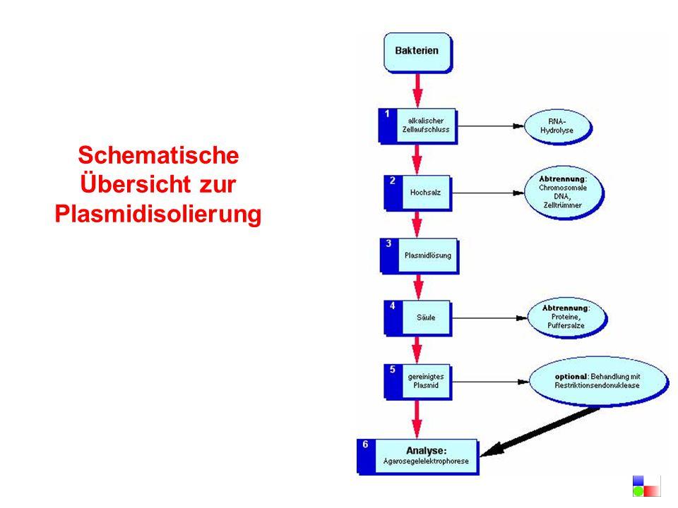 Schematische Übersicht zur Plasmidisolierung
