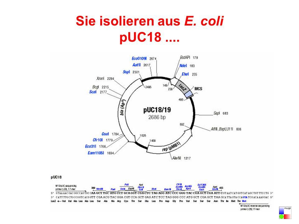 Sie isolieren aus E. coli pUC18....