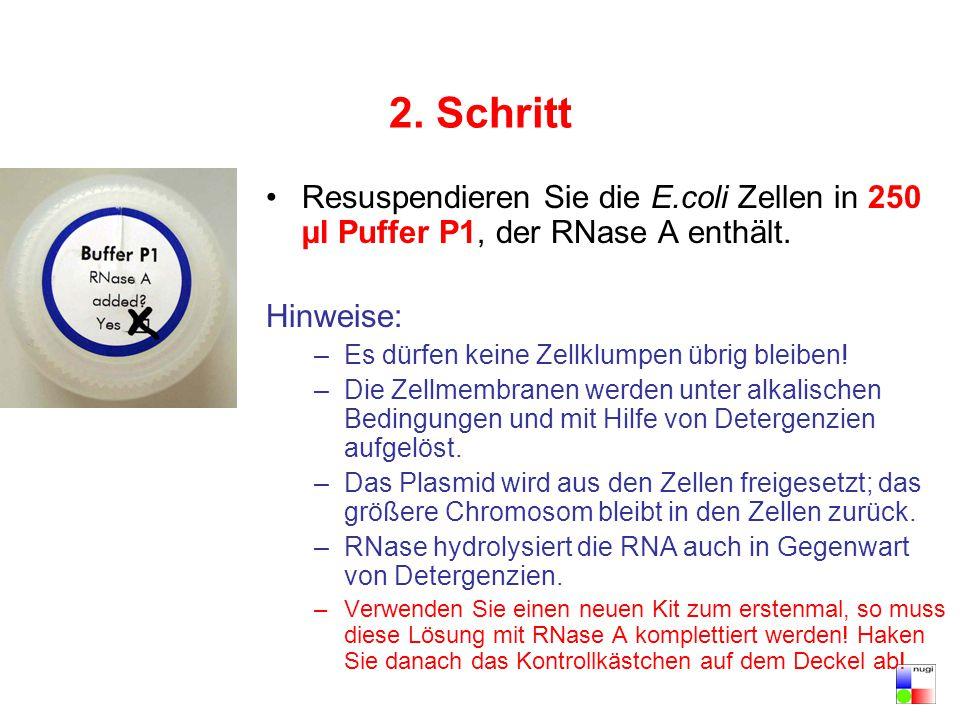 2. Schritt Resuspendieren Sie die E.coli Zellen in 250 µl Puffer P1, der RNase A enthält. Hinweise: –Es dürfen keine Zellklumpen übrig bleiben! –Die Z