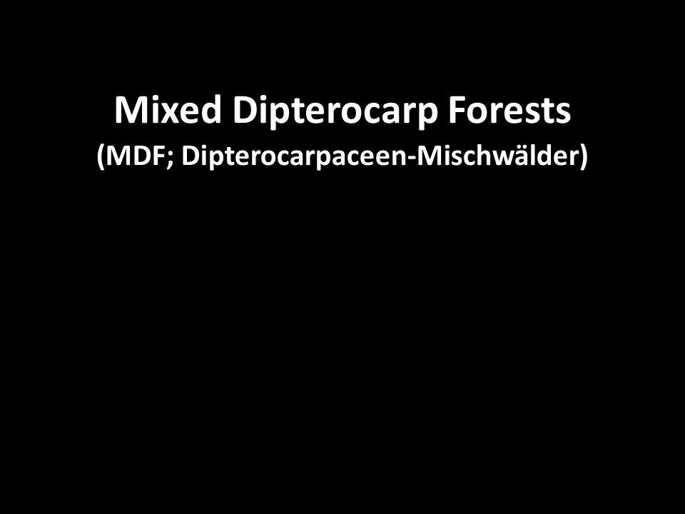 """Mixed Dipterocarp Forests (MDF; Dipterocarpaceen-Mischwälder) """"Gaps (Lücken) und Sukzessionen Wenn ein Baum stirbt und umfällt, hinterläßt er eine mehr oder weniger große Lücke (""""gap ), die nach und nach von neuen Bäumen ausgefüllt wird, bis der ursprüngliche Zustand wiederhergestellt ist (3 Stadien unterscheidbar: Entstehung der Lücke – Aufbauphase - Reifephase)."""