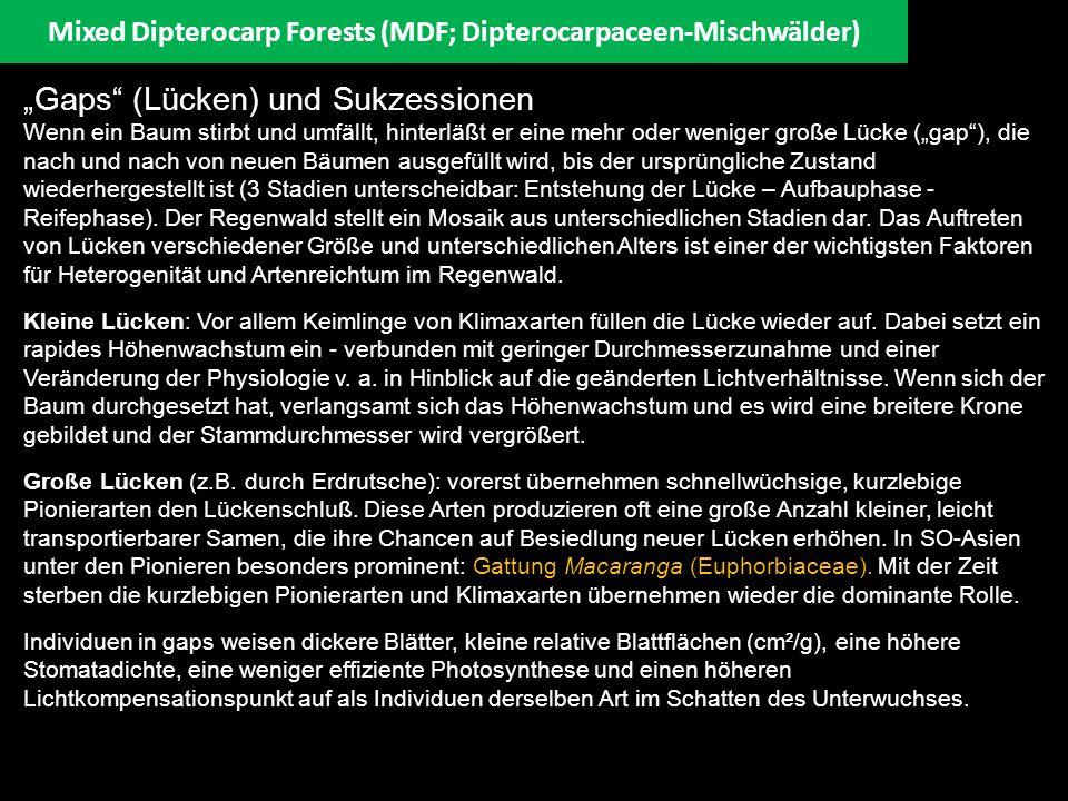 """Mixed Dipterocarp Forests (MDF; Dipterocarpaceen-Mischwälder) """"Gaps"""" (Lücken) und Sukzessionen Wenn ein Baum stirbt und umfällt, hinterläßt er eine me"""