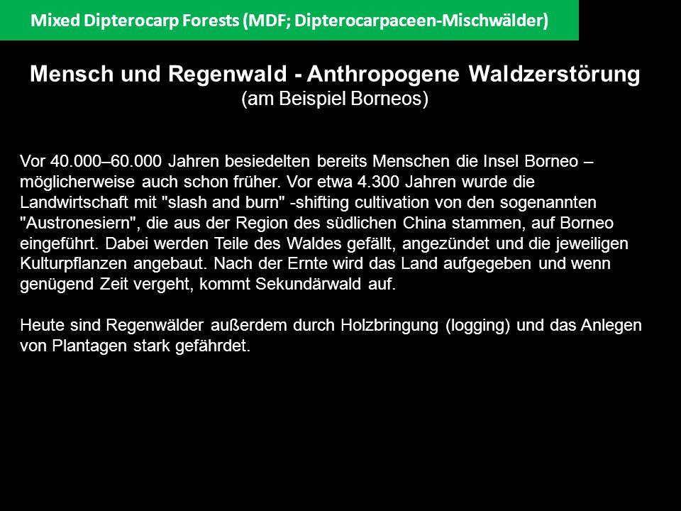 Mixed Dipterocarp Forests (MDF; Dipterocarpaceen-Mischwälder) Mensch und Regenwald - Anthropogene Waldzerstörung (am Beispiel Borneos) Vor 40.000–60.0