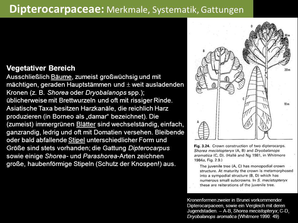 Dipterocarpaceae: Merkmale, Systematik, Gattungen Vegetativer Bereich Ausschließlich Bäume, zumeist großwüchsig und mit mächtigen, geraden Hauptstämme