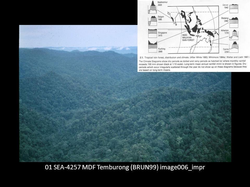 Sehr artenreich: Z.B.MDF im Temburong Distr.