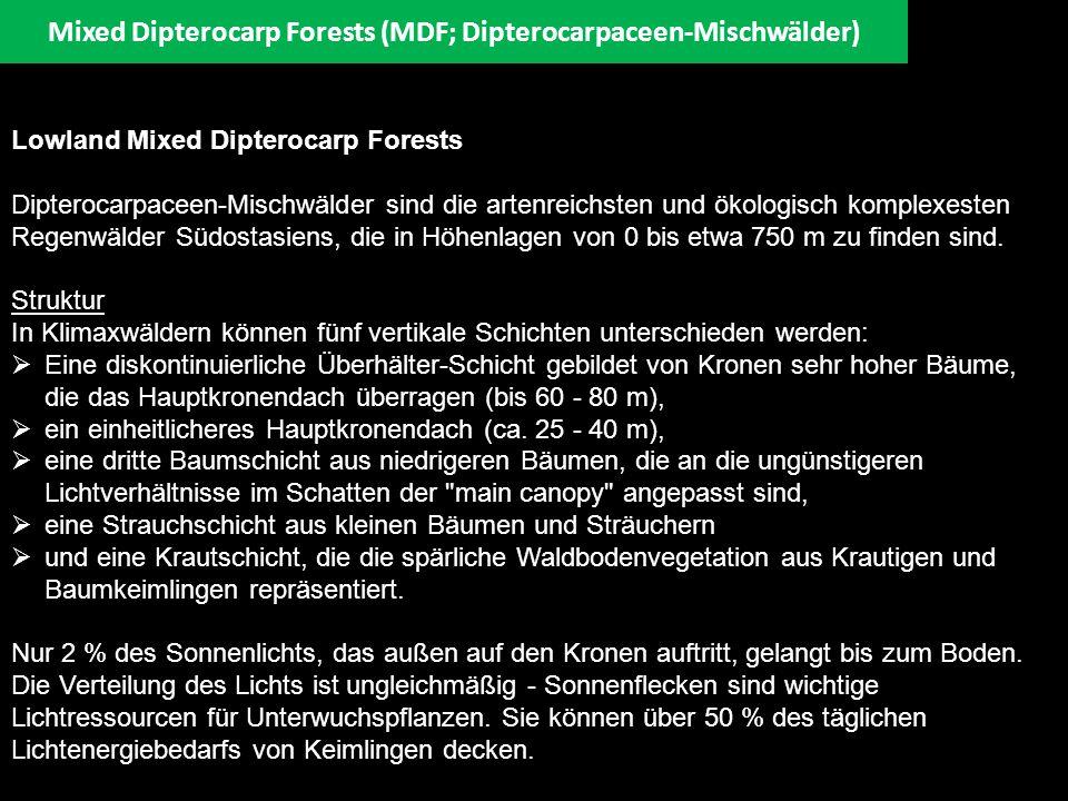 Ökologie (Fortsetzung) Die in Savannen- und Waldlandgebieten des kontinentalen Asiens vorkommenden Dipterocarpaceae sind während der Trockenzeit laubwerfend.