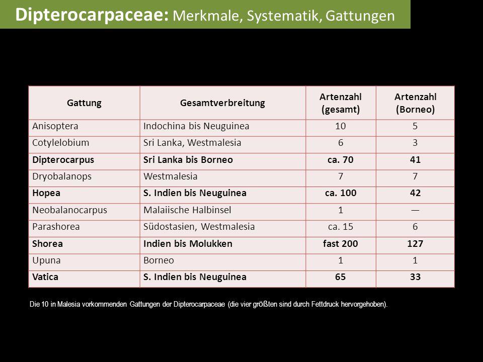 GattungGesamtverbreitung Artenzahl (gesamt) Artenzahl (Borneo) AnisopteraIndochina bis Neuguinea105 CotylelobiumSri Lanka, Westmalesia63 Dipterocarpus