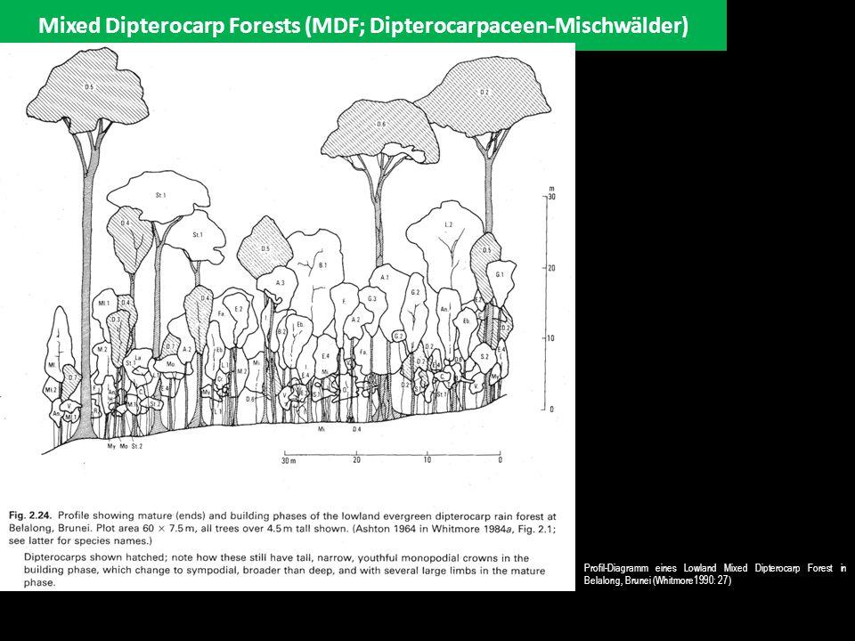 Mixed Dipterocarp Forests (MDF; Dipterocarpaceen-Mischwälder) Profil-Diagramm eines Lowland Mixed Dipterocarp Forest in Belalong, Brunei (Whitmore1990