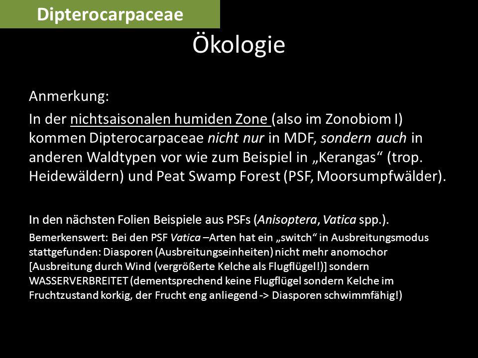 Anmerkung: In der nichtsaisonalen humiden Zone (also im Zonobiom I) kommen Dipterocarpaceae nicht nur in MDF, sondern auch in anderen Waldtypen vor wi