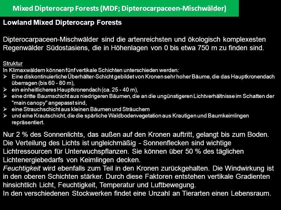 Mixed Dipterocarp Forests (MDF; Dipterocarpaceen-Mischwälder) Lowland Mixed Dipterocarp Forests Dipterocarpaceen-Mischwälder sind die artenreichsten u
