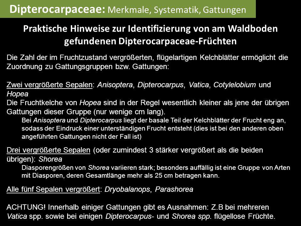 Praktische Hinweise zur Identifizierung von am Waldboden gefundenen Dipterocarpaceae-Früchten Die Zahl der im Fruchtzustand vergrößerten, flügelartig