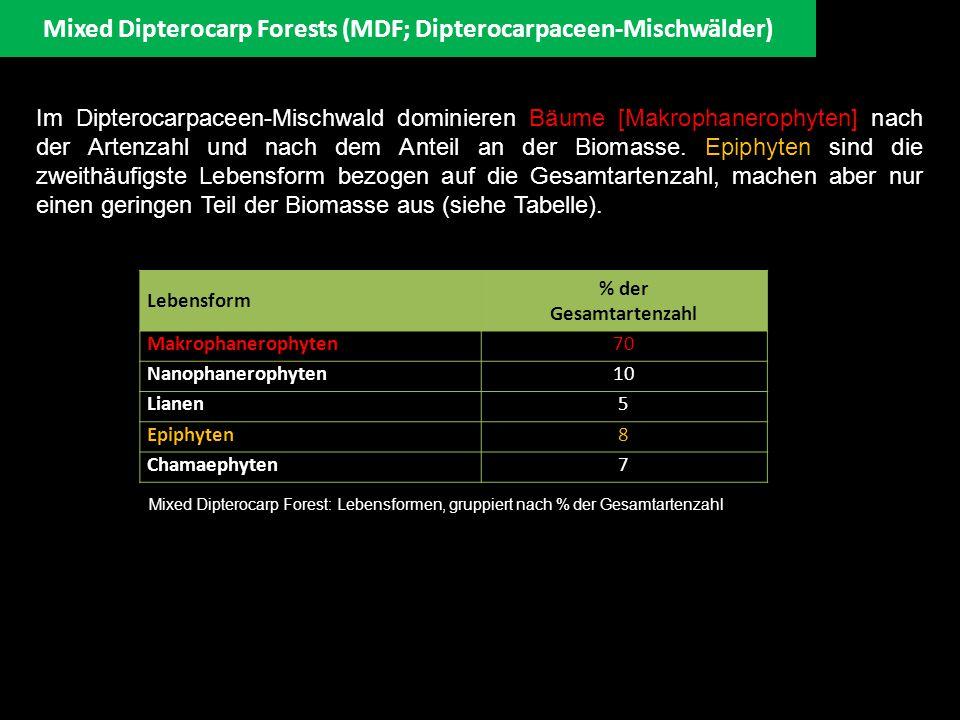 Mixed Dipterocarp Forests (MDF; Dipterocarpaceen-Mischwälder) Species frequency histogram f ü r Plot 1 in Belalong, Brunei (Cranbrook & Edwards 1994: 101) Während im Lowland MDF die Dipterocarpaceae besonders reichhaltig vertreten sind, nimmt mit zunehmender Seehöhe ihre Anzahl drastisch ab (siehe links).