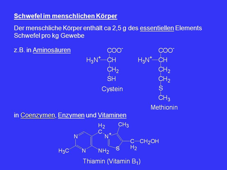 Schwefel im menschlichen Körper Der menschliche Körper enthält ca 2,5 g des essentiellen Elements Schwefel pro kg Gewebe z.B. in Aminosäuren Coenzymen
