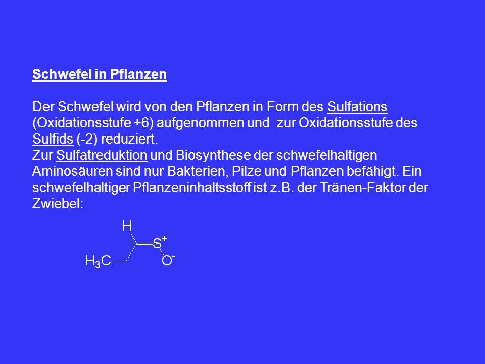 Schwefel in Pflanzen Der Schwefel wird von den Pflanzen in Form des Sulfations (Oxidationsstufe +6) aufgenommen und zur Oxidationsstufe des Sulfids (-