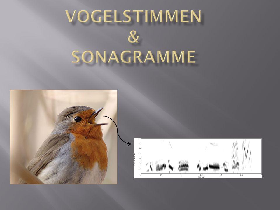 Möchsgrasmücke Kleiber Zaunkönig Star Rotkehlchen Singdrossel Hausrotschwanz Buchfink Goldammer