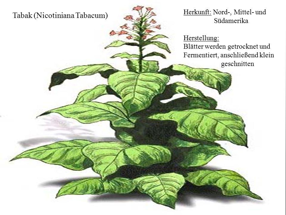 17 Tabak Tabak (Nicotiniana Tabacum) Herkunft: Nord-, Mittel- und Südamerika Herstellung: Blätter werden getrocknet und Fermentiert, anschließend klei