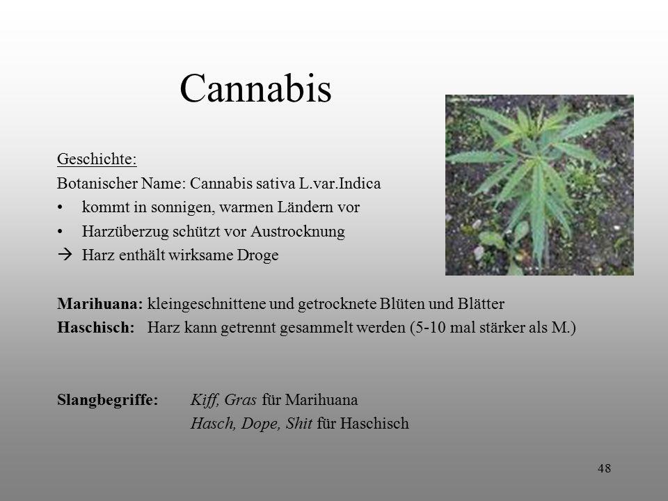 48 Cannabis Geschichte: Botanischer Name: Cannabis sativa L.var.Indica kommt in sonnigen, warmen Ländern vor Harzüberzug schützt vor Austrocknung  Ha