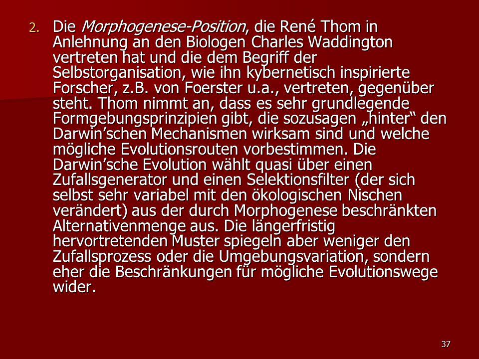 37 2. Die Morphogenese-Position, die René Thom in Anlehnung an den Biologen Charles Waddington vertreten hat und die dem Begriff der Selbstorganisatio