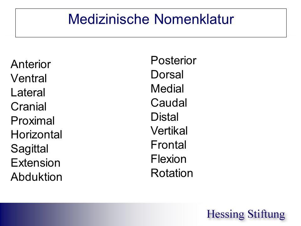 Medizinische Nomenklatur Anterior Ventral Lateral Cranial Proximal Horizontal Sagittal Extension Abduktion Posterior Dorsal Medial Caudal Distal Verti