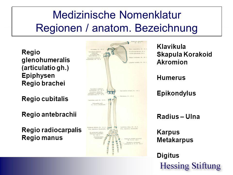 Obere Extremität Medizinische Nomenklatur Regionen / anatom. Bezeichnung Klavikula Skapula Korakoid Akromion Humerus Epikondylus Radius – Ulna Karpus
