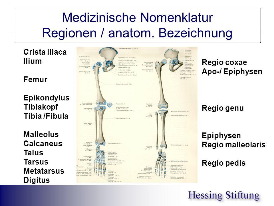 Untere Extremität Medizinische Nomenklatur Regionen / anatom. Bezeichnung Crista iliaca Ilium Femur Epikondylus Tibiakopf Tibia /Fibula Malleolus Calc