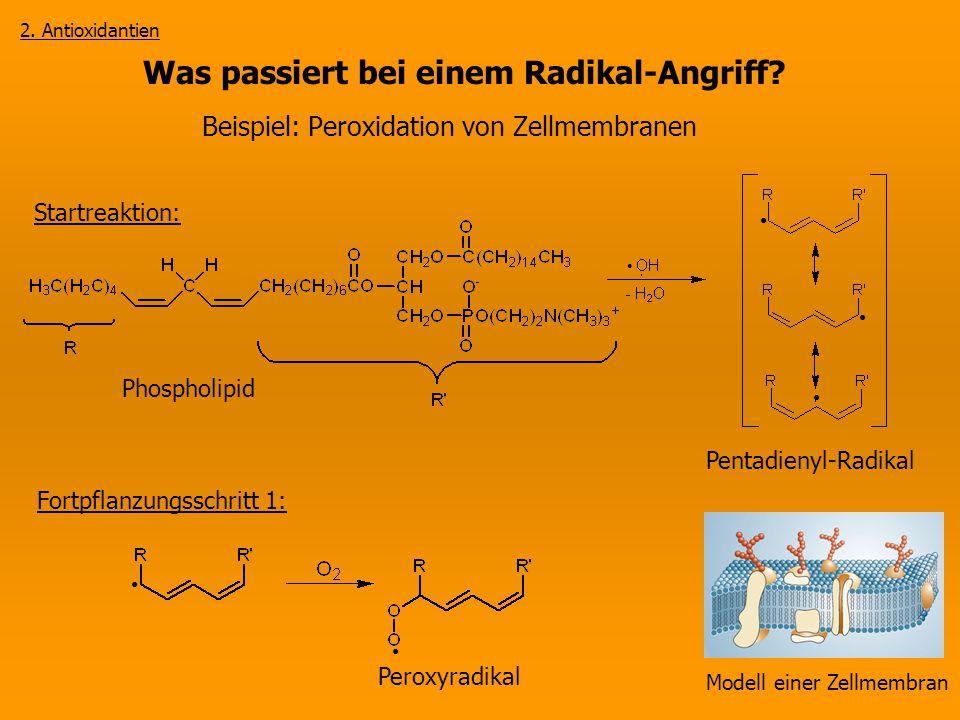 Was passiert bei einem Radikal-Angriff? Beispiel: Peroxidation von Zellmembranen Modell einer Zellmembran 2. Antioxidantien Phospholipid Peroxyradikal