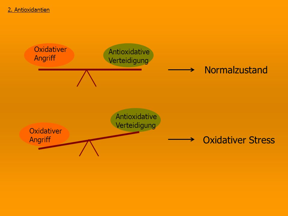 Oxidativer Stress Oxidativer Angriff Antioxidative Verteidigung Oxidativer Angriff Normalzustand 2. Antioxidantien