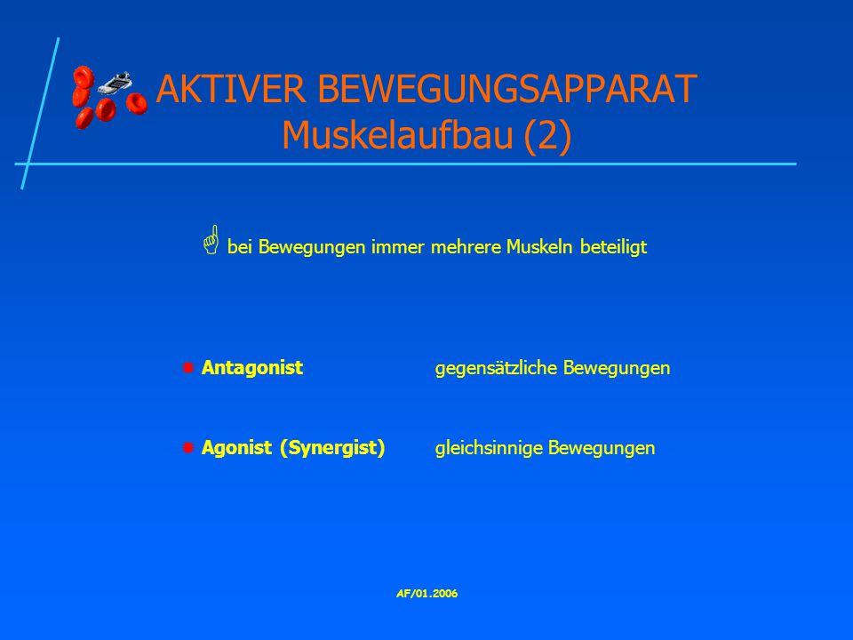 AF/01.2006 AKTIVER BEWEGUNGSAPPARAT Muskelaufbau (2)  Antagonistgegensätzliche Bewegungen  Agonist (Synergist)gleichsinnige Bewegungen  bei Bewegungen immer mehrere Muskeln beteiligt