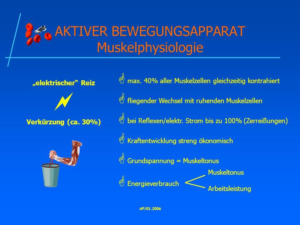 "AF/01.2006 AKTIVER BEWEGUNGSAPPARAT Muskelphysiologie ""elektrischer Reiz  Verkürzung (ca."