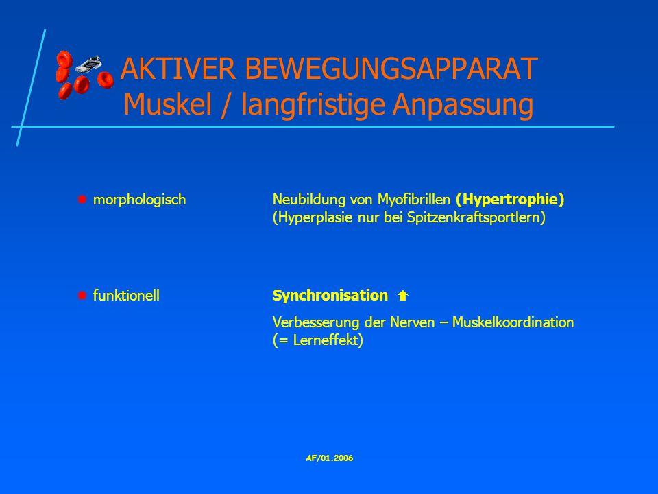 AF/01.2006 AKTIVER BEWEGUNGSAPPARAT Muskel / langfristige Anpassung  morphologischNeubildung von Myofibrillen (Hypertrophie) (Hyperplasie nur bei Spitzenkraftsportlern)  funktionellSynchronisation  Verbesserung der Nerven – Muskelkoordination (= Lerneffekt)