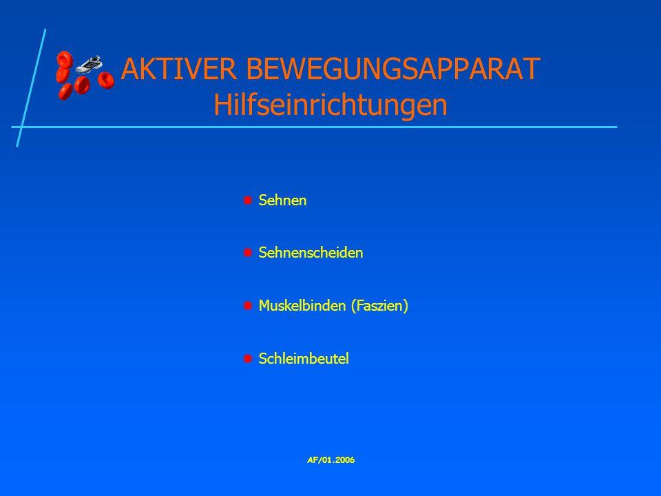 AF/01.2006 AKTIVER BEWEGUNGSAPPARAT Hilfseinrichtungen  Sehnen  Sehnenscheiden  Muskelbinden (Faszien)  Schleimbeutel
