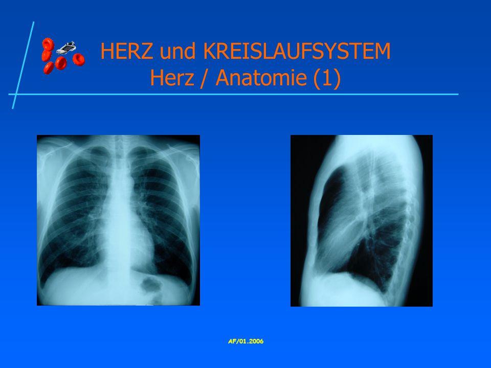 AF/01.2006 HERZ und KREISLAUFSYSTEM Herz / Anatomie (1)