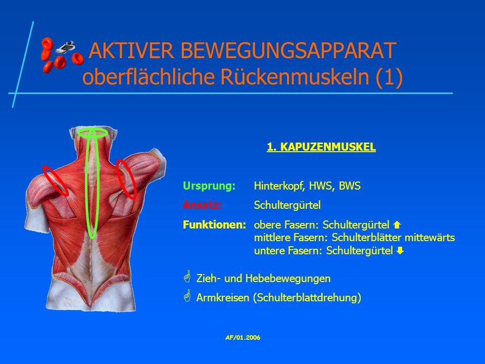 AF/01.2006 AKTIVER BEWEGUNGSAPPARAT oberflächliche Rückenmuskeln (1) 1.