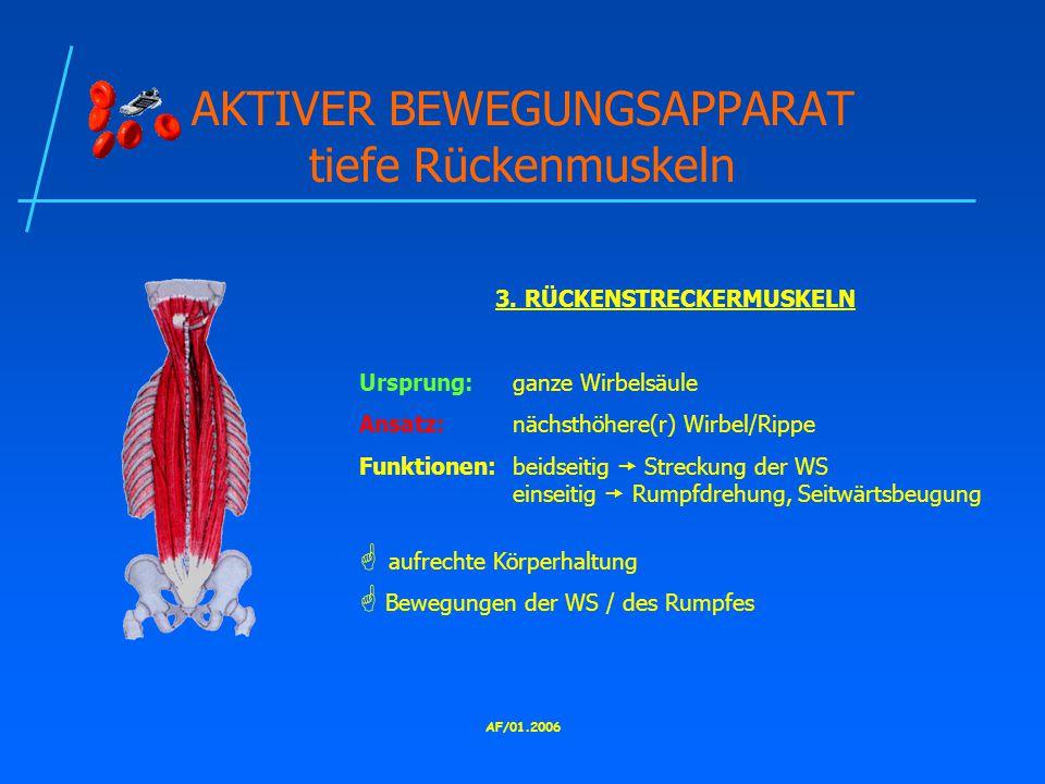 AF/01.2006 AKTIVER BEWEGUNGSAPPARAT tiefe Rückenmuskeln 3.
