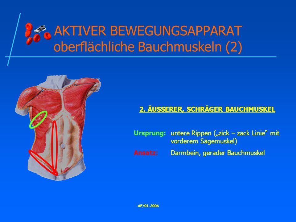AF/01.2006 AKTIVER BEWEGUNGSAPPARAT oberflächliche Bauchmuskeln (2) 2.