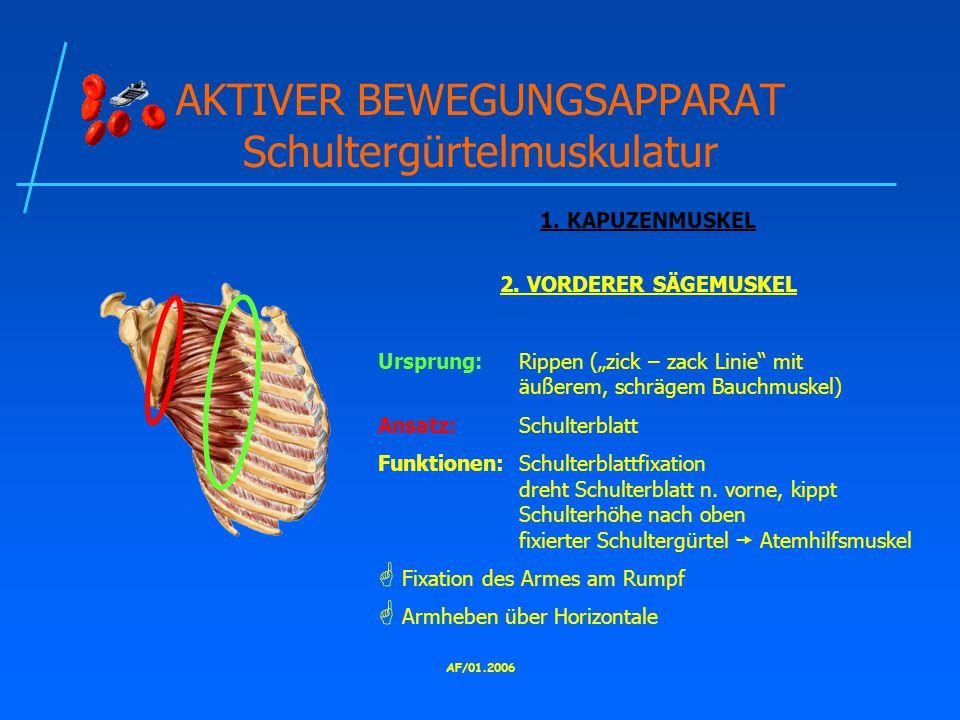 AF/01.2006 AKTIVER BEWEGUNGSAPPARAT Schultergürtelmuskulatur 1.