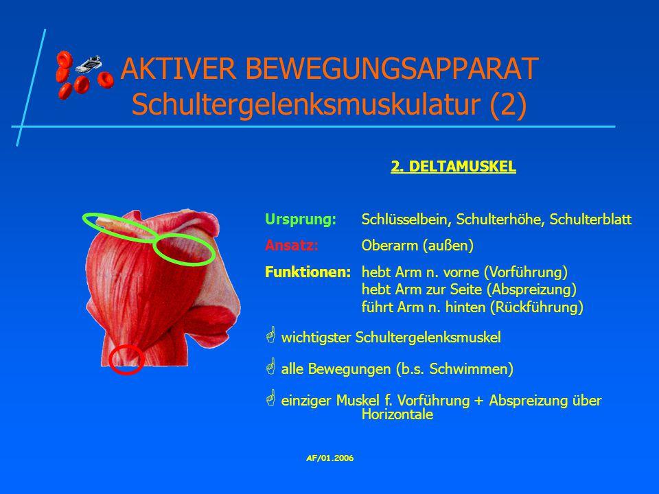AF/01.2006 AKTIVER BEWEGUNGSAPPARAT Schultergelenksmuskulatur (2) 2.