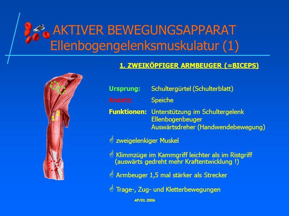 AF/01.2006 AKTIVER BEWEGUNGSAPPARAT Ellenbogengelenksmuskulatur (1) 1.