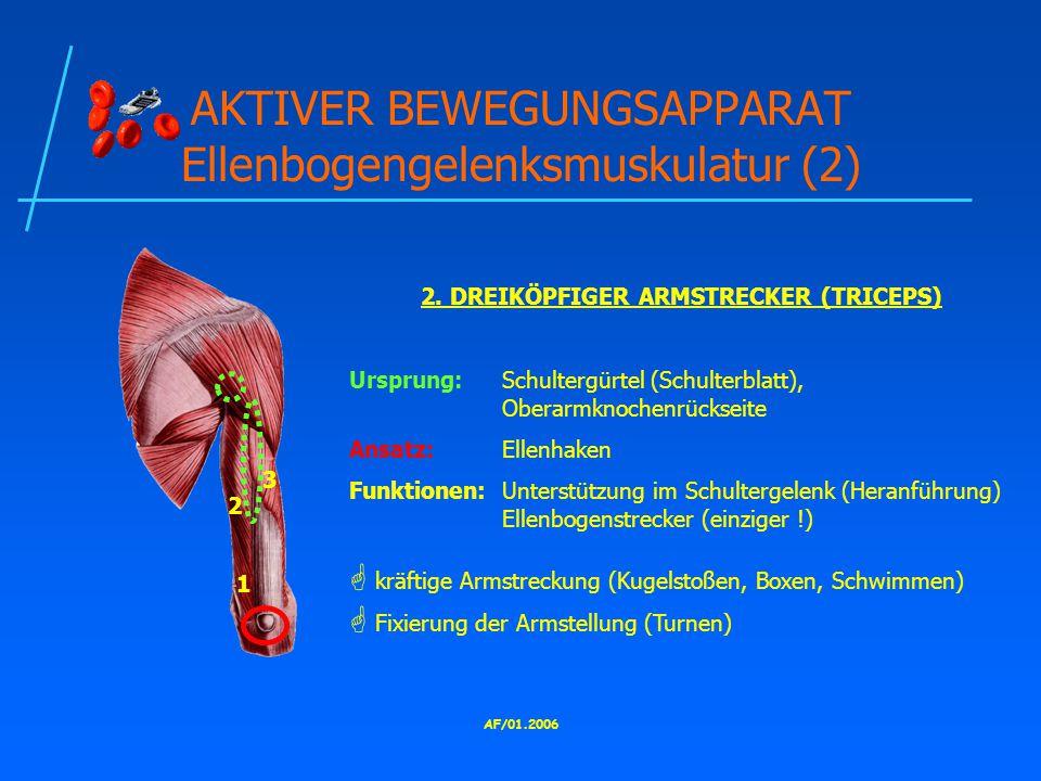 AF/01.2006 AKTIVER BEWEGUNGSAPPARAT Ellenbogengelenksmuskulatur (2) 2.