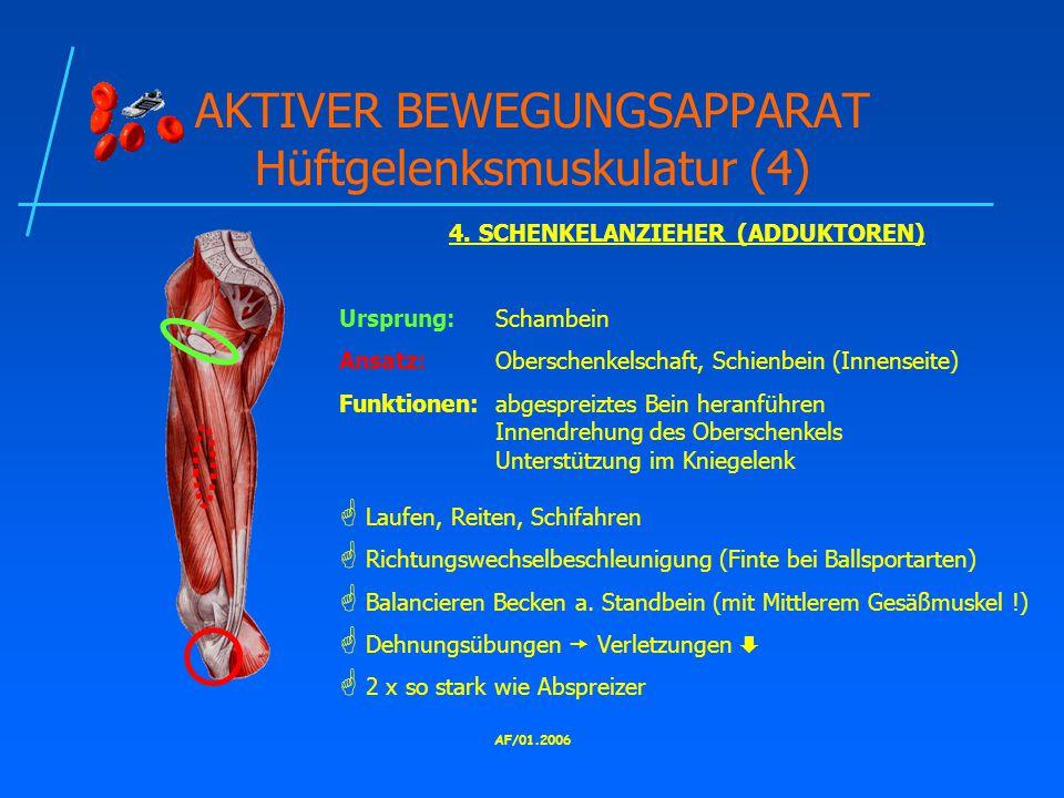 AF/01.2006 AKTIVER BEWEGUNGSAPPARAT Hüftgelenksmuskulatur (4) 4.