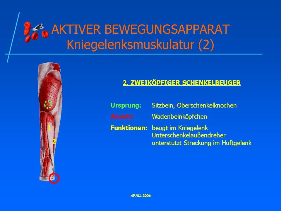 AF/01.2006 AKTIVER BEWEGUNGSAPPARAT Kniegelenksmuskulatur (2) 2.