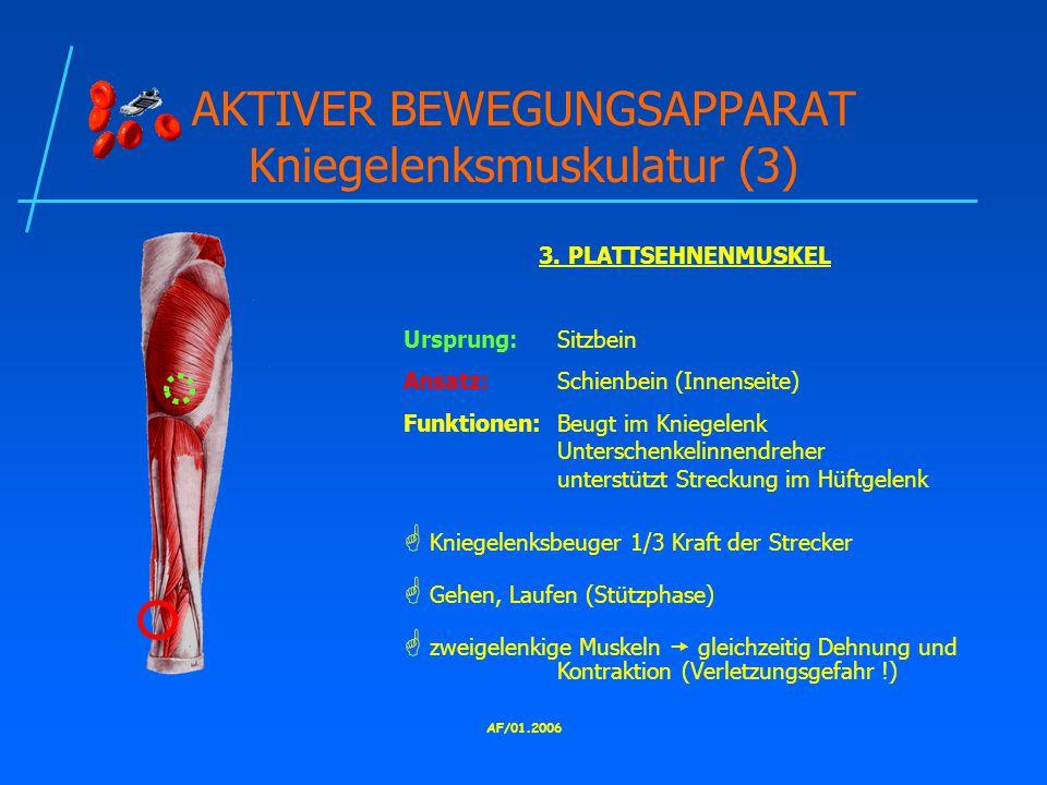 AF/01.2006 AKTIVER BEWEGUNGSAPPARAT Kniegelenksmuskulatur (3) 3.