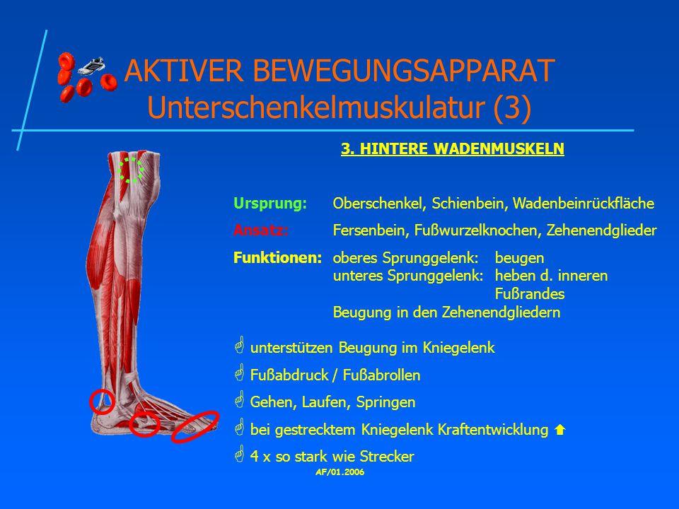 AF/01.2006 AKTIVER BEWEGUNGSAPPARAT Unterschenkelmuskulatur (3) 3.