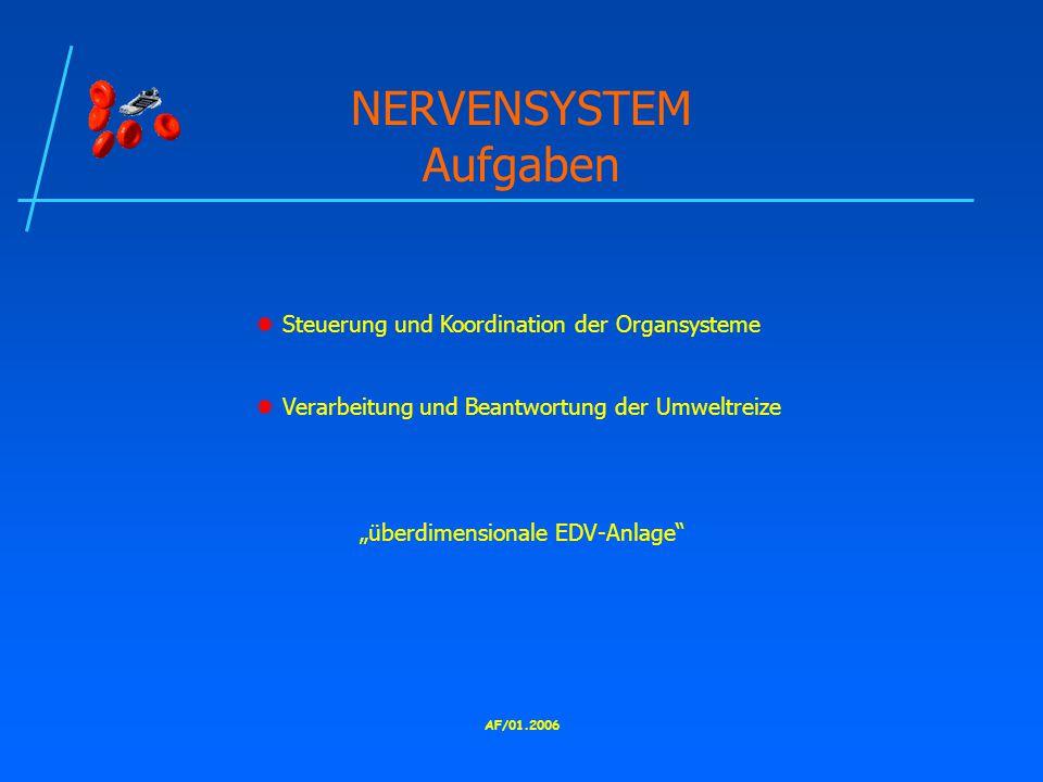 """AF/01.2006 NERVENSYSTEM Aufgaben  Steuerung und Koordination der Organsysteme  Verarbeitung und Beantwortung der Umweltreize """"überdimensionale EDV-Anlage"""