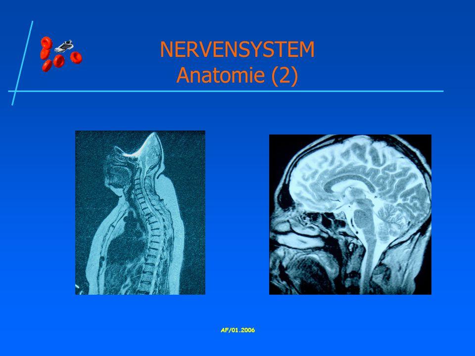AF/01.2006 NERVENSYSTEM Anatomie (2)