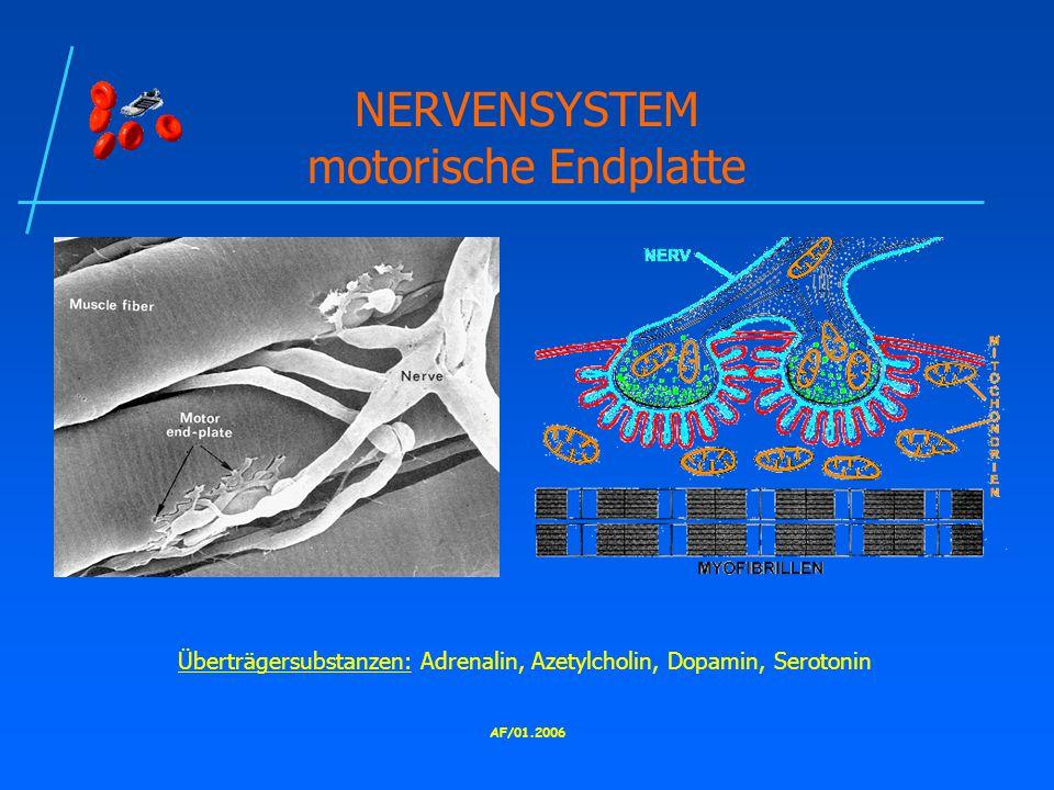 AF/01.2006 NERVENSYSTEM motorische Endplatte Überträgersubstanzen: Adrenalin, Azetylcholin, Dopamin, Serotonin